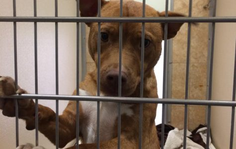 Pals with Paws: The Woodford Humane Society