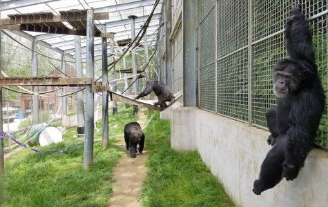 Play Primate Sanctuary