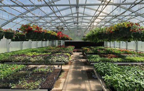 Planting, Growing, and Selling: A Community's Hidden Gem