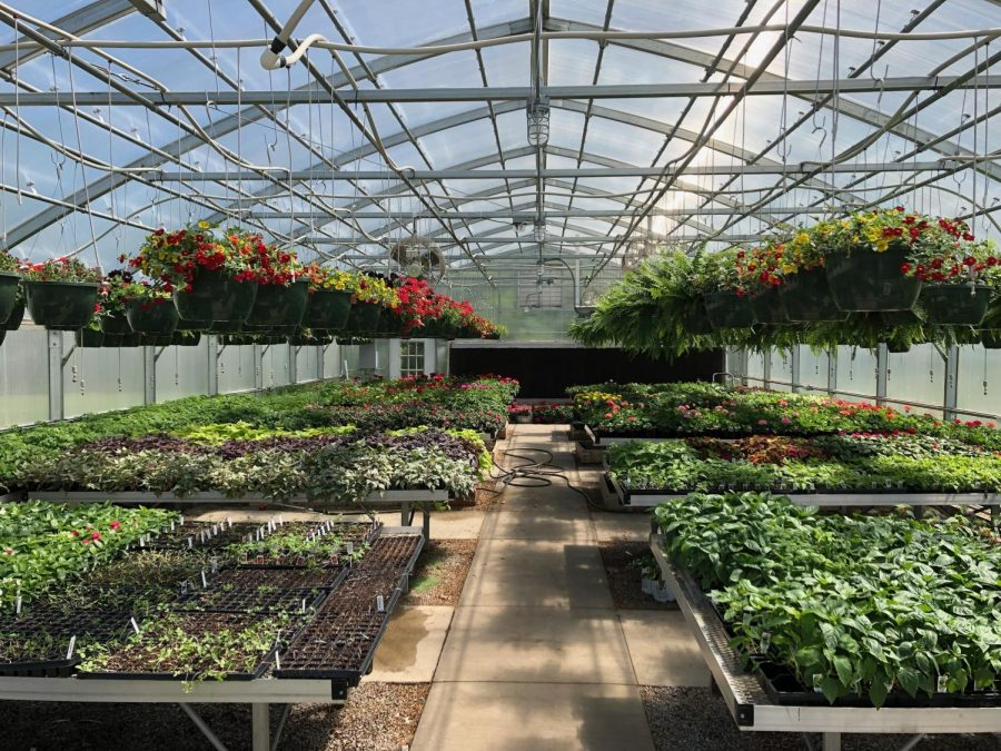 Inside the greenhouse at WCHS.