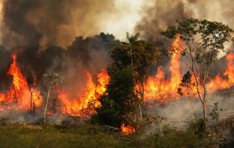 Home to Over 10% of the World's Species is Burning; Here's Why