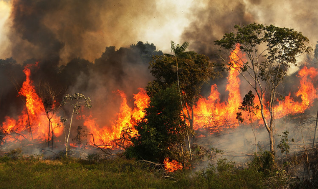 A picture of the Amazon Rainforest burning.