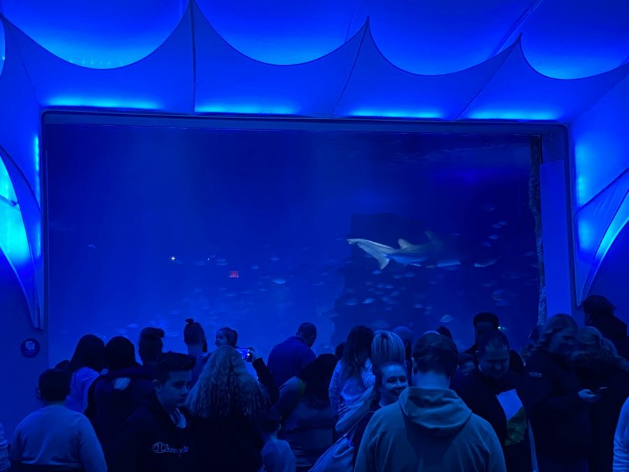 Pictured above is a tank that had both Tiger Sharks, Shark Rays and stingrays! Shark Ray fins are sold on the market for expensive prices which are causing them to become endangered. And the Sand Tiger Sharks gulp air to stay buoyant.