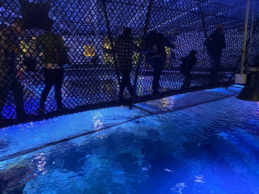 One of the many cool things you can do at the aquarium takes a walk across this bridge if you dare! Although all seems fine, but, the shark tank in right below it. Would you do it?