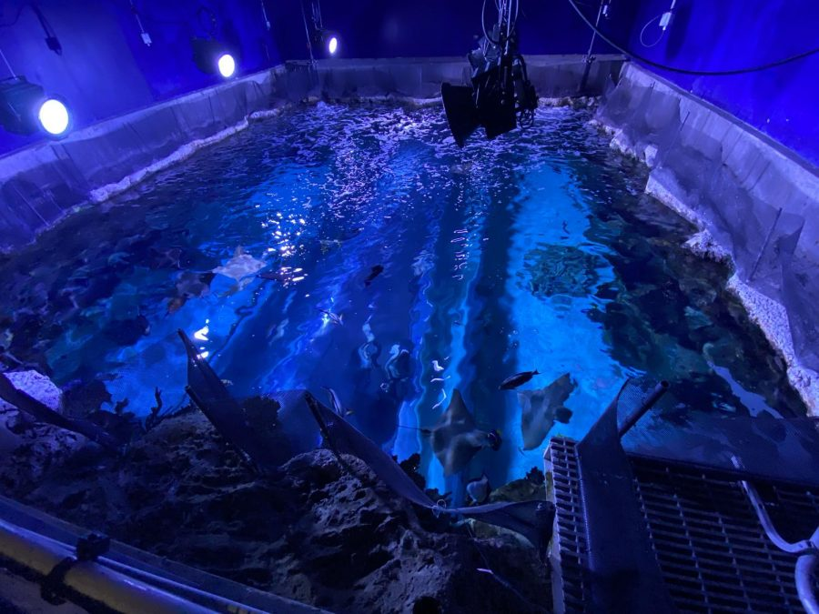 While taking the Ocean Wonders Backstage Tour, we were shown this area of the aquarium! This area had a coral reef; however, it wasn't alive due to the amount of housekeeping it would require. It is there to cater to the fish that need this habitat-like area!