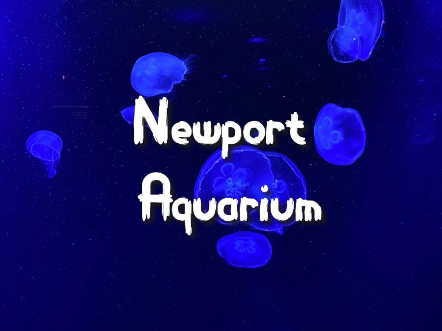 Ocean Wonders in Kentucky: Newport Aquarium
