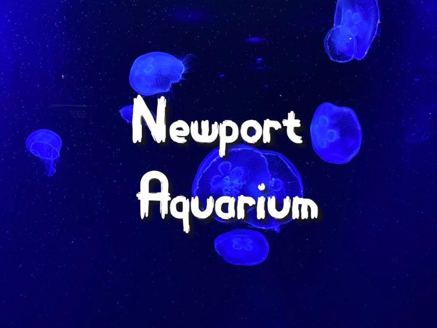 Ocean Wonders in Kentucky: Newport Aquarium
