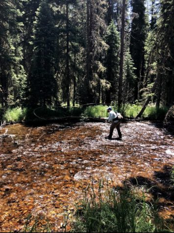 Mike chasing down fish in small streams.