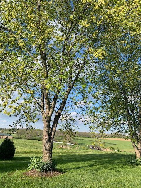 A tree in springtime
