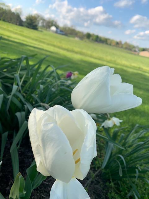 Flowers blooming in spring.